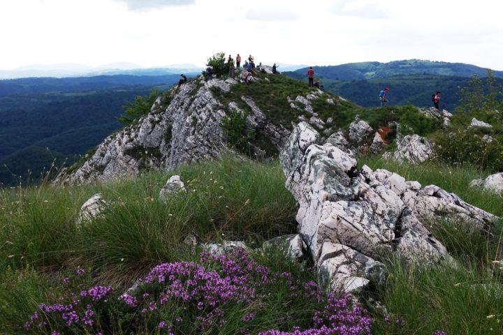 Homoljske planine, vrh Zdravča
