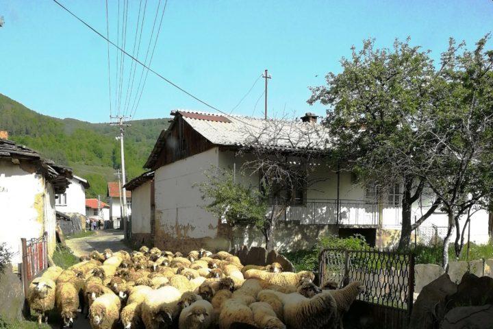 Dojkinci, Stara planina