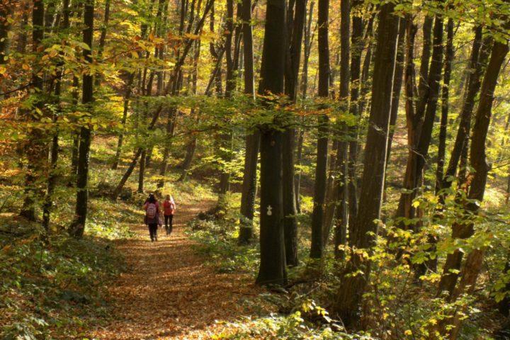 Fruška Gora hiking