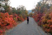 Djerdap hiking tour Sokolovac