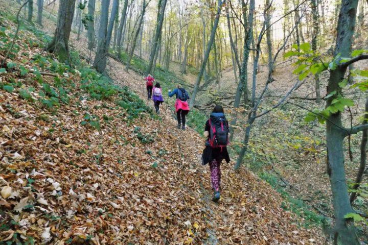 Hiking Fruška gora