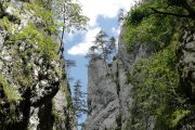 Canyon Beli Rzav Tara