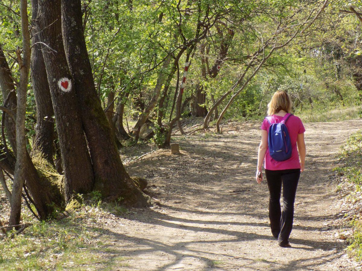 pešačke ture iz Beograda Fruška gora