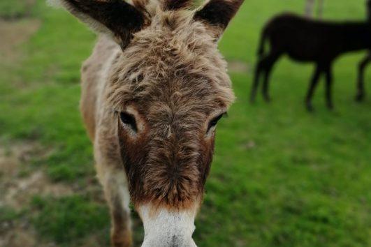 Zasavica-farma magaraca