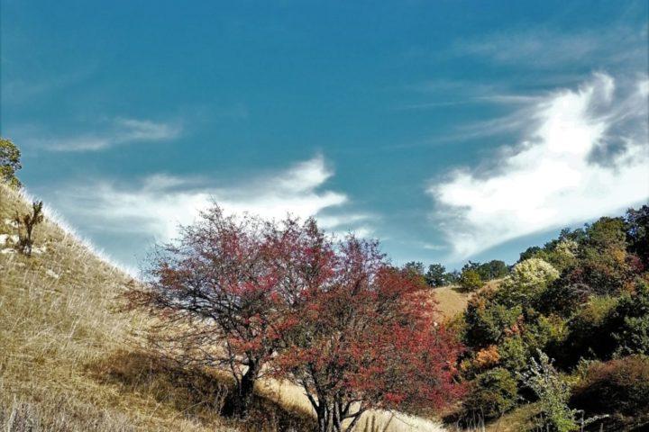 Zagajička brda u jesen