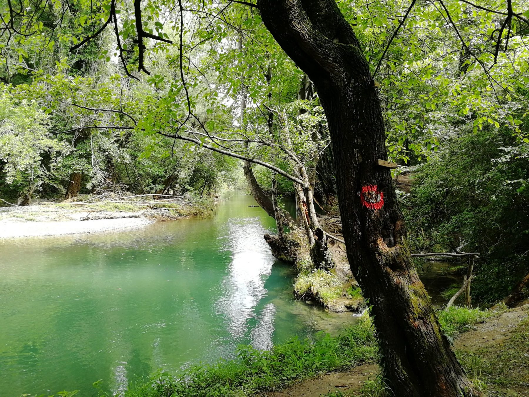 Ribnica and the gorge of the river Gradac