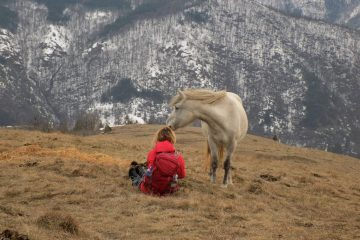 Stolovi divlji konji