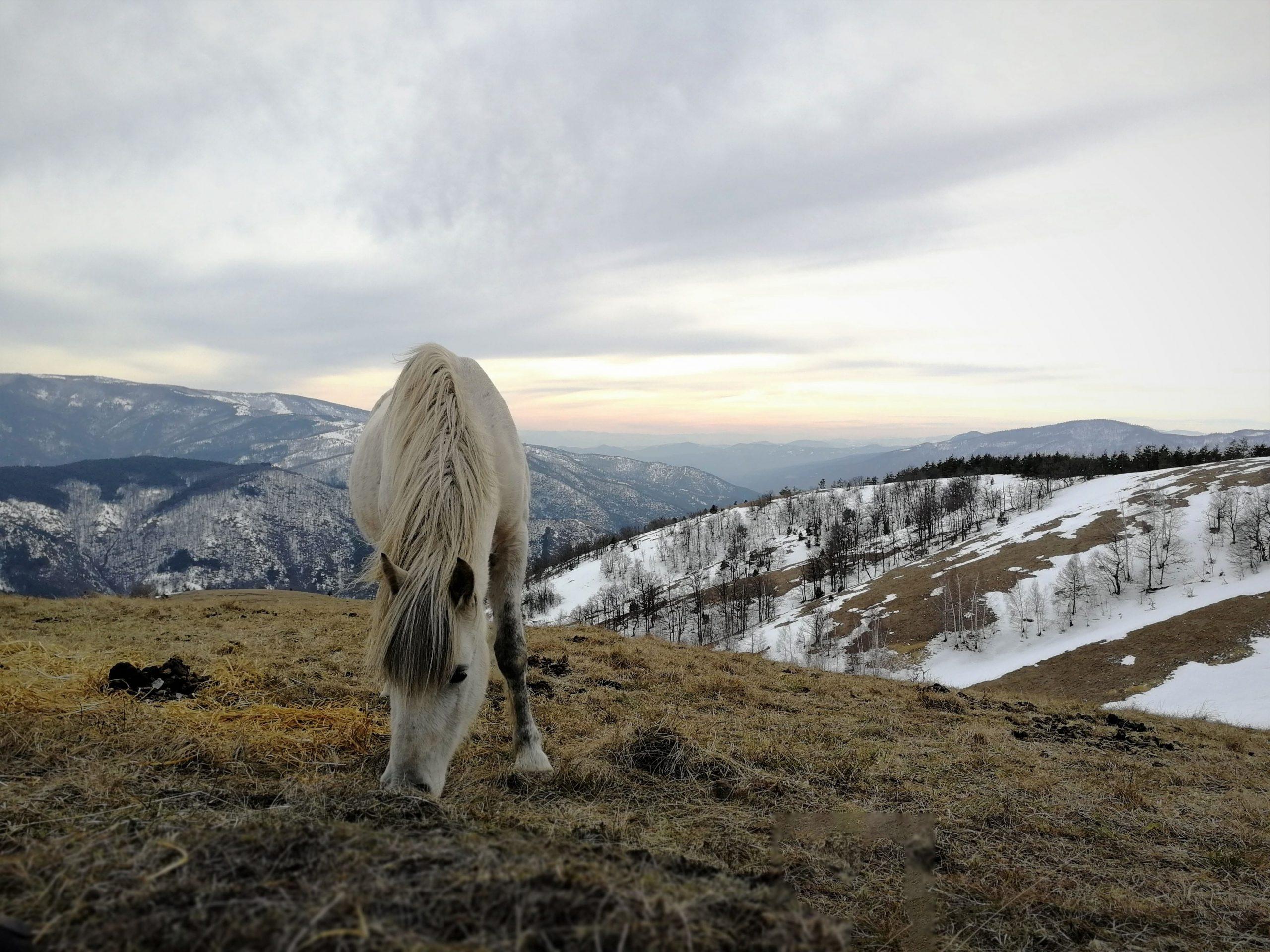 Stolovi – planinarenje u carstvu poludivljih konja