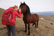 Stolovi divlji konj
