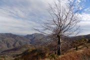 Planina Tornička Bobija