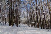 Fruška gora zima