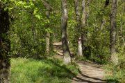 Fruška gora u proleće pešačenje