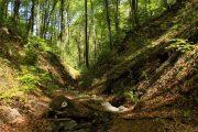 Dumbovački potok Fruška gora