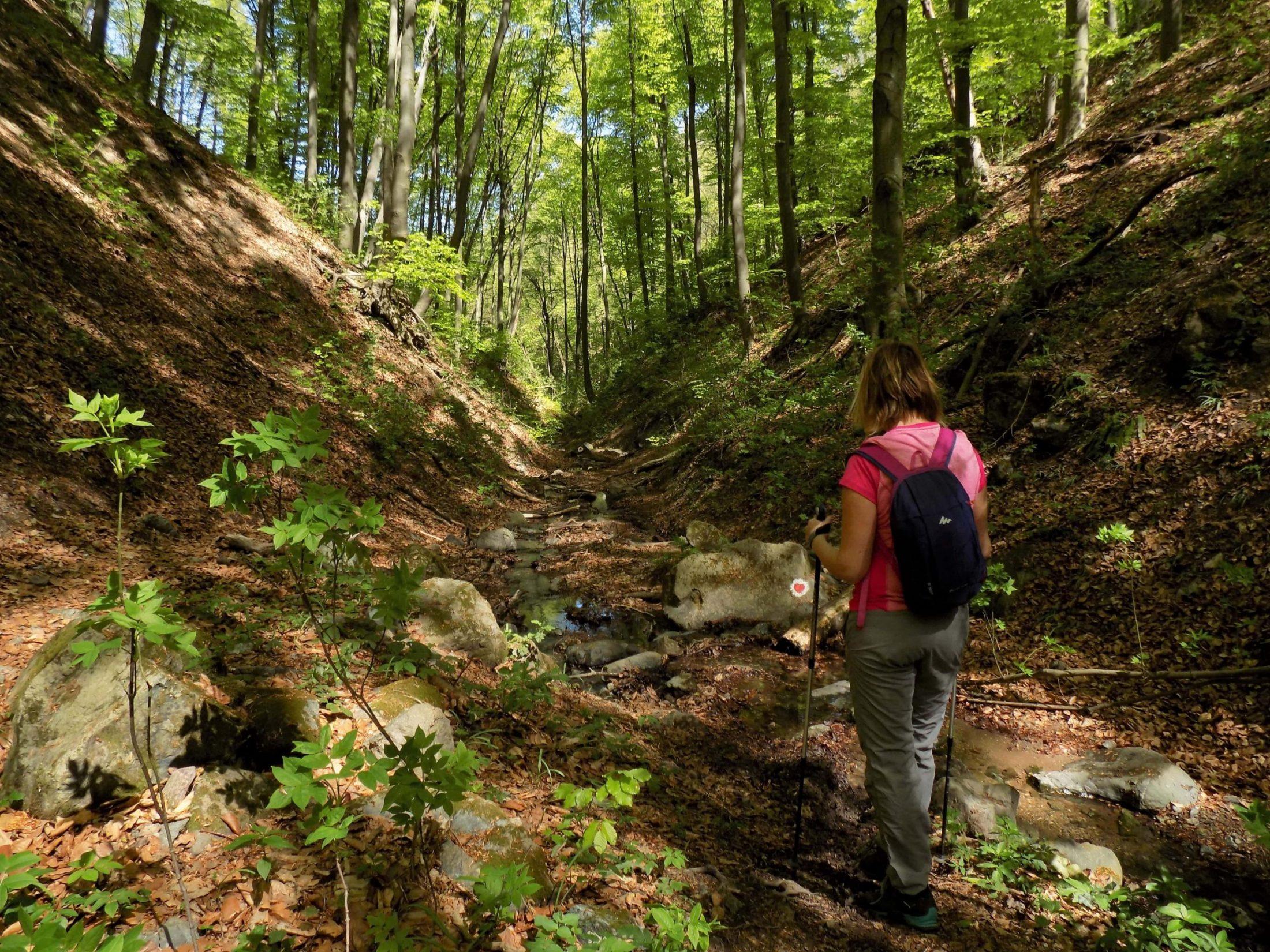 Fruška gora u proleće-Dumbovački vodopad, Beli majdan