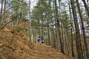Ovčar hiking